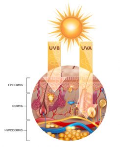 How UVB and UVA rays penetrates into the skin