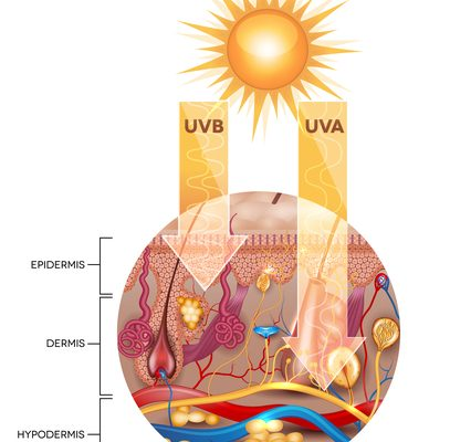 The Science Of Sun Tanning